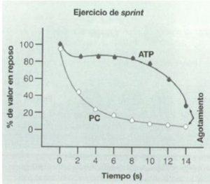 Cambios en el ATP y fosfocreatina muscular durante los primeros segundos de esfuerzo muscular máximo