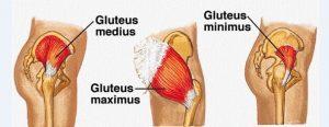 Músculos de los glúteos