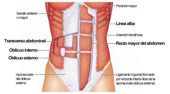 Ejercicios para abdomen o ejercicios abdominales para tener un ...