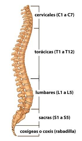 Importancia de nuestra columna vertebral en el entrenamiento de fuerza