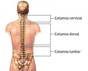 Curvaturas columna vertebral