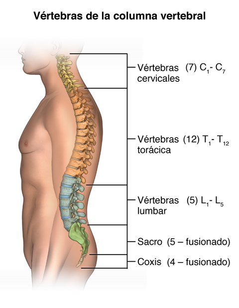 Ejercicios o movimientos que producen lesiones en la columna ...