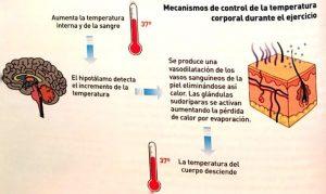 Sudor y termorregulación en el corredor de fondo