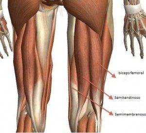 desgarro en el musculo isquiotibial